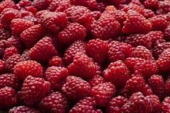 背景莓红色 免版税库存照片