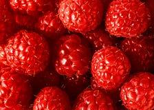 背景莓 库存图片
