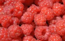 背景莓 图库摄影