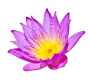 背景莲花紫色白色 库存照片