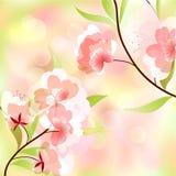 背景蒲公英充分的草甸春天黄色 免版税库存图片