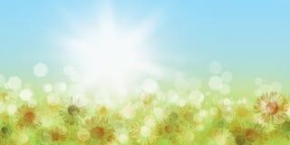 背景蒲公英充分的草甸春天黄色 库存图片