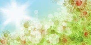 背景蒲公英充分的草甸春天黄色 库存照片