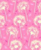 背景蒲公英模式粉红色中继器 库存图片