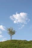 背景蓝天结构树 库存图片