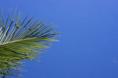 背景蓝绿色掌上型计算机天空结构树 与地方的唯一棕榈叶横幅模板文本的 库存照片