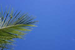 背景蓝绿色掌上型计算机天空结构树 与地方的唯一棕榈叶横幅模板文本的 免版税库存图片