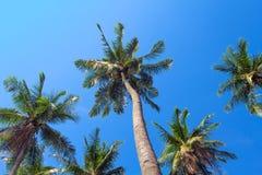 背景蓝绿色掌上型计算机天空结构树 椰子树树地面视图照片 免版税库存照片