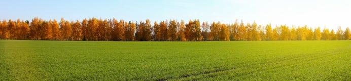 背景蓝色云彩调遣草绿色本质天空空白小束 反对蓝天的绿草领域 免版税库存照片