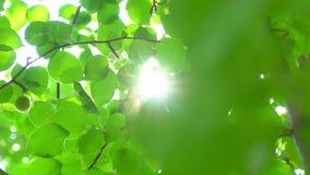 背景蓝色云彩调遣草绿色本质天空空白小束 太阳亮光通过吹在风树绿色叶子 与太阳火光的被弄脏的抽象bokeh 阳光 影视素材