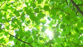 背景蓝色云彩调遣草绿色本质天空空白小束 太阳亮光通过吹在风树绿色叶子 与太阳火光的被弄脏的抽象bokeh 阳光 股票录像