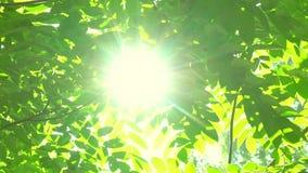 背景蓝色云彩调遣草绿色本质天空空白小束 太阳亮光通过吹在风树绿色叶子 与太阳火光的被弄脏的抽象bokeh 阳光 股票视频