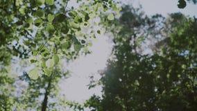 背景蓝色云彩调遣草绿色本质天空空白小束 美好的太阳亮光通过吹在风树绿色离开,慢动作 影视素材