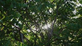 背景蓝色云彩调遣草绿色本质天空空白小束 美好的太阳亮光通过吹在风树绿色离开 与太阳的被弄脏的抽象bokeh 股票视频