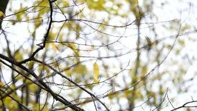 背景蓝色云彩调遣草绿色本质天空空白小束 美好的太阳亮光通过吹在风树黄色离开 与太阳的被弄脏的抽象bokeh 股票录像