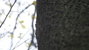背景蓝色云彩调遣草绿色本质天空空白小束 美好的太阳亮光通过吹在风树黄色离开 与太阳的被弄脏的抽象bokeh 股票视频