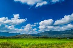 背景蓝色云彩调遣草绿色本质天空空白小束 库存照片