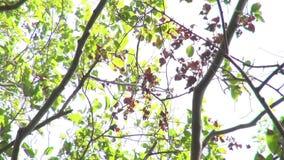 背景蓝色云彩调遣草绿色本质天空空白小束 美好的太阳亮光通过吹在风树绿色离开 影视素材