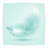 背景蓝色关闭软绵绵羽毛重点视图白色 免版税库存图片
