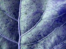 背景蓝色叶子 免版税图库摄影