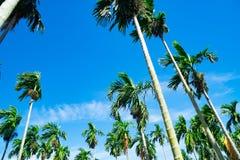 背景蓝色掌上型计算机天空结构树 旅行、夏天、假期和热带海滩 图库摄影