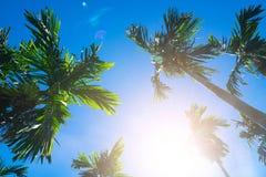 背景蓝色掌上型计算机天空结构树 旅行、夏天、假期和热带海滩 库存照片
