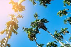 背景蓝色掌上型计算机天空结构树 旅行、夏天、假期和热带海滩 免版税库存照片
