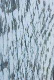 背景蓝色木 免版税库存照片