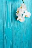 背景蓝色的兰花白色 免版税库存图片