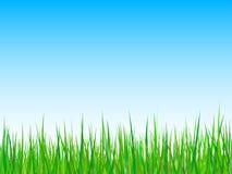 背景蓝色草天空向量 库存图片