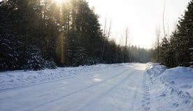 背景蓝色雪花白色冬天 冬天森林晴朗的冬日 森林杉木路 太阳的呈虹彩光芒 免版税库存图片