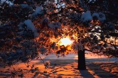 背景蓝色雪花白色冬天 包括的霜结构树 免版税库存图片