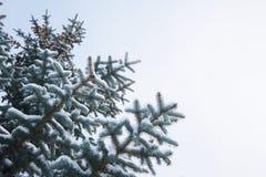 背景蓝色雪花白色冬天 在树冰和雪的一棵针叶树 图库摄影