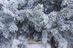 背景蓝色雪花白色冬天 在树冰和雪的一棵针叶树 免版税库存图片
