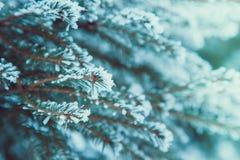 背景蓝色雪花白色冬天 在雪的冷杉分行 雪和圣诞树 免版税库存照片