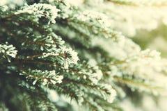 背景蓝色雪花白色冬天 在雪的冷杉分行 雪和圣诞树 库存图片