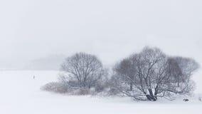 背景蓝色雪花白色冬天 树uder雪 免版税库存图片