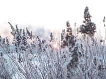 背景蓝色雪花白色冬天 用霜盖的小尖峰 库存图片