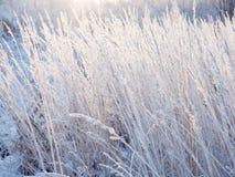 背景蓝色雪花白色冬天 用霜盖的小尖峰 免版税图库摄影