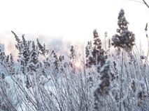 背景蓝色雪花白色冬天 用霜盖的小尖峰 免版税库存图片
