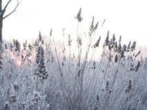 背景蓝色雪花白色冬天 用霜盖的小尖峰 库存照片