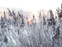 背景蓝色雪花白色冬天 用霜盖的小尖峰 免版税库存照片
