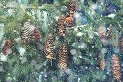 背景蓝色雪花白色冬天 被弄脏的多雪的云杉和降雪 免版税库存图片