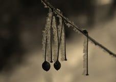 背景蓝色雪花白色冬天 免版税库存图片