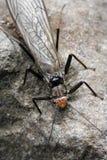 背景蓝色蜻蜓飞行昆虫 免版税库存照片