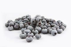 背景蓝莓冻结的白色 免版税库存照片