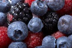 背景蓝莓莓 库存照片