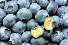 背景蓝莓食物健康有机 库存照片