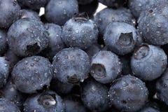 背景蓝莓 库存照片