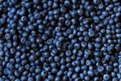 背景蓝莓 库存图片